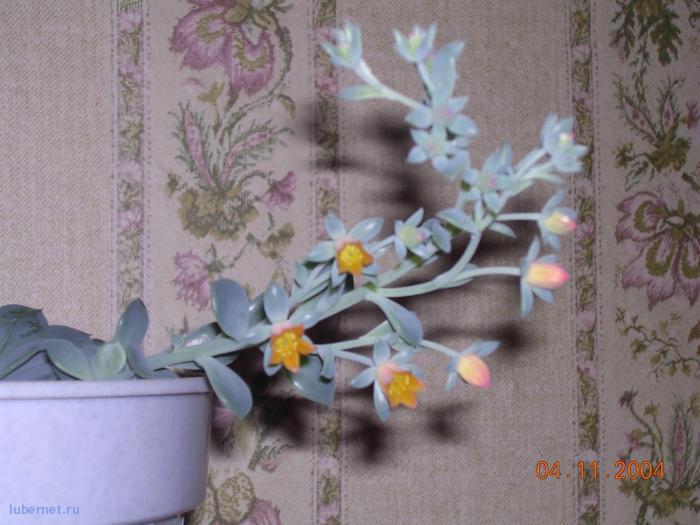 Фотография: он тоже цветет, пользователя: Александр_1822