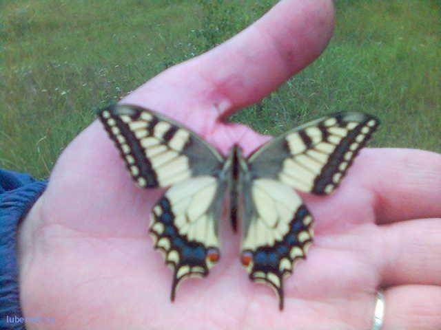 Фотография: бабочка, пользователя: Александр_1822