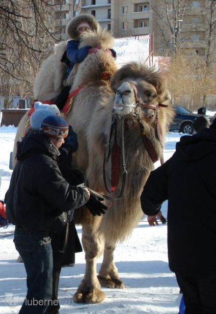 Фотография: Утепленный транспорт, пользователя: zvezdochet