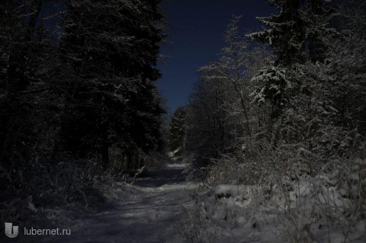 Фотография: Лесная дорога лунной ночью, пользователя: zvezdochet