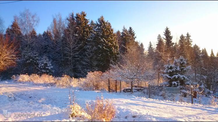Фотография: Запах зимы. 27 ноября 2015, пользователя: zvezdochet