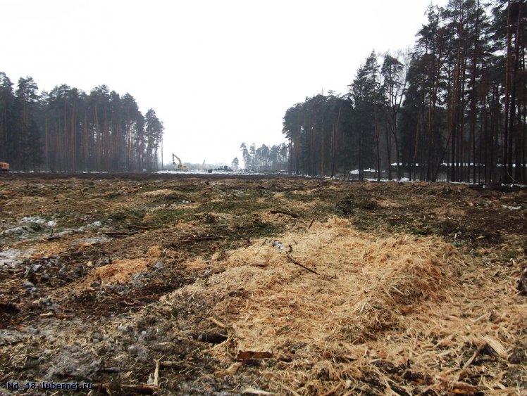 Фотография: вырубленная просека в цаговском лесу, пользователя: Nd_18