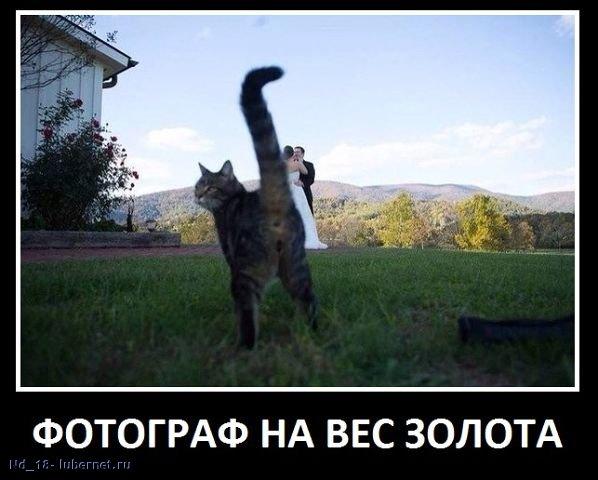 Фотография: фотограф.jpg, пользователя: Nd_18