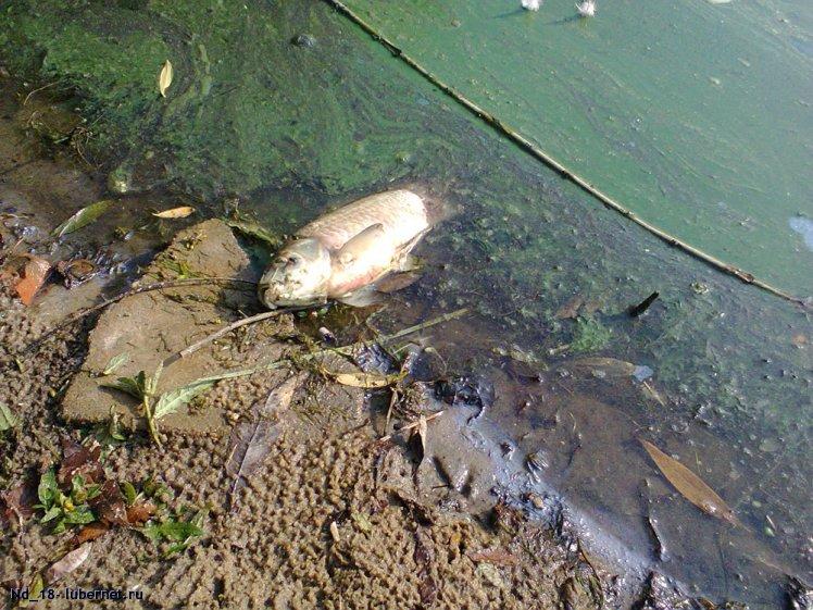 Фотография: рыба-1.jpg, пользователя: Nd_18