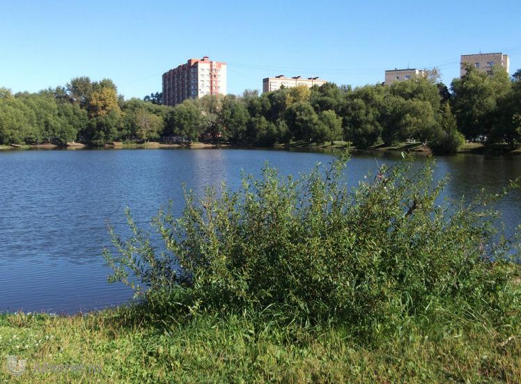 Фотография: Наташинский пруд и кустик, пользователя: Nd_18