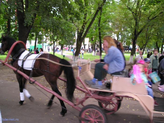 Фотография: Лошади в парке2, пользователя: rindex
