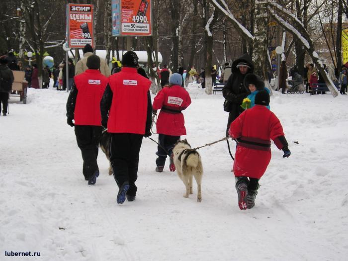 Фотография: Собачки, пользователя: rindex