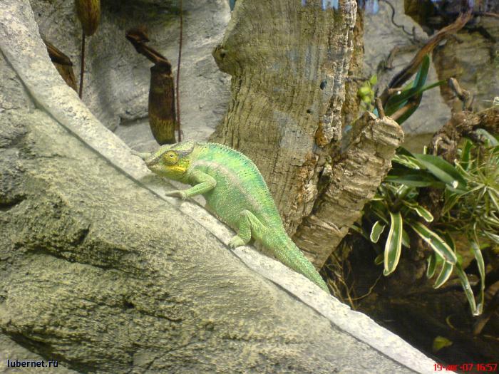 Фотография: И даже хамелеон, пользователя: rindex