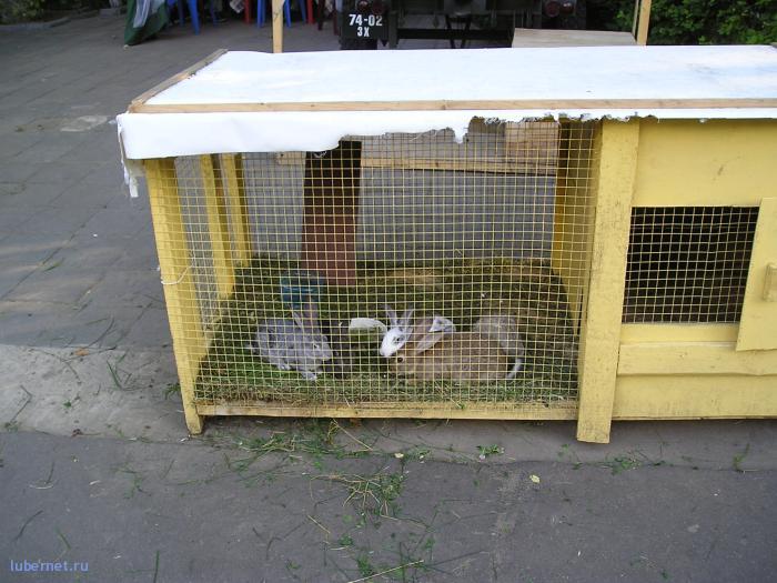 Фотография: Кролики в Люберецком парке культуры и отдыха!, пользователя: rindex