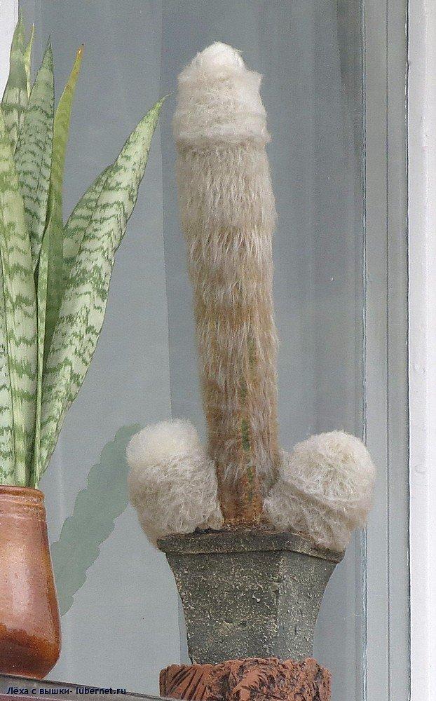 Фотография: kaktus.jpg, пользователя: Лёха с вышки