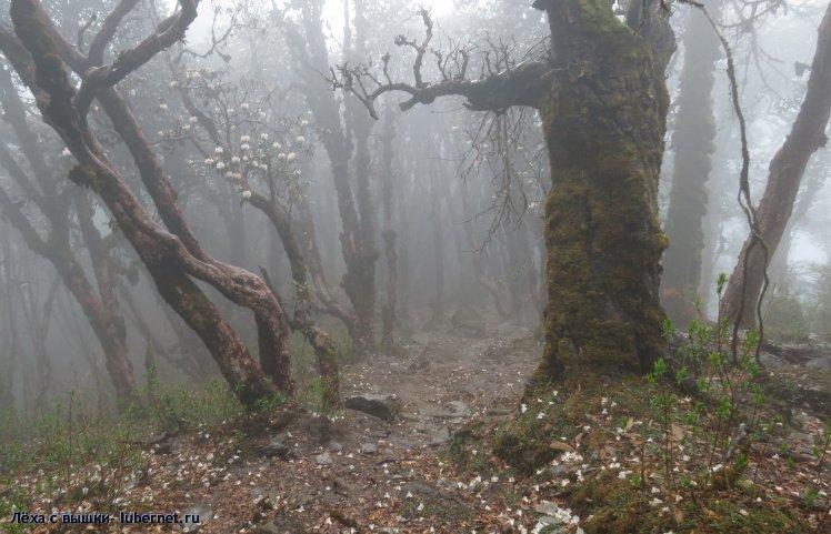 Фотография: forest1.jpg, пользователя: Лёха с вышки