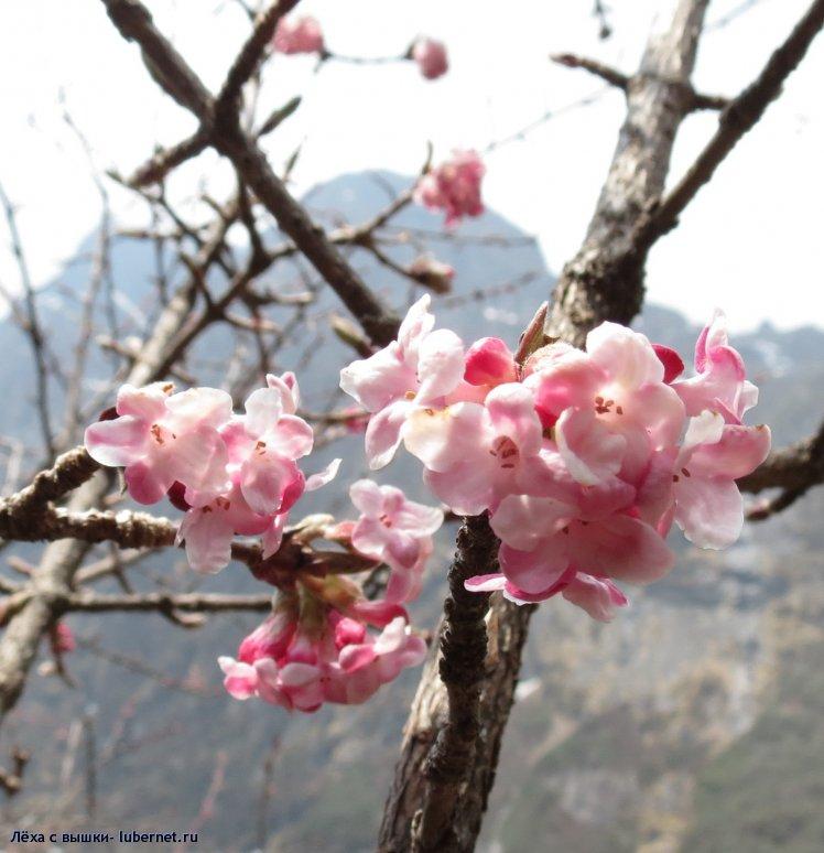 Фотография: flower1.jpg, пользователя: Лёха с вышки
