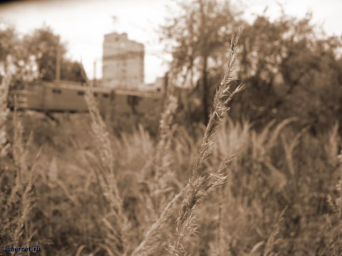 Фотография: трава, пользователя: mashka-bu