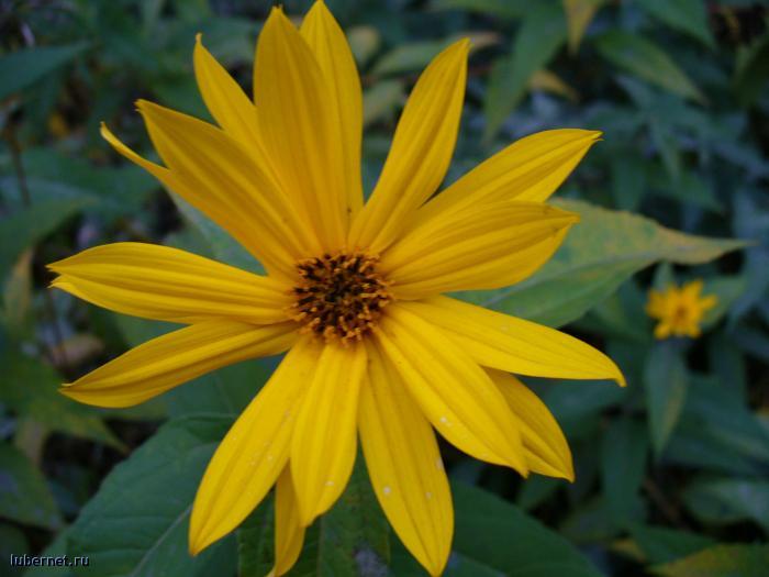 Фотография: цвяточек, пользователя: mashka-bu
