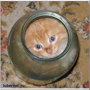 Фотография: Кот в банке, пользователя: Yadder