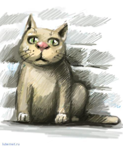 Фотография: кот, пользователя: gazzz