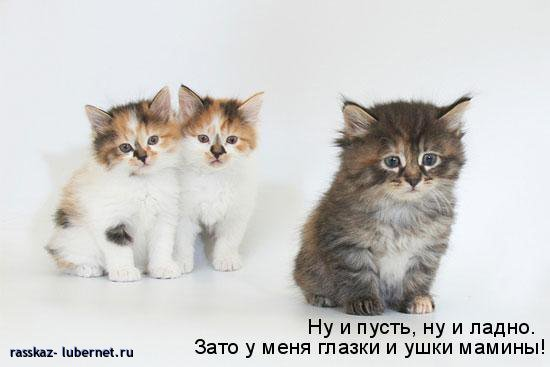 Фотография: 021.jpg, пользователя: rasskaz