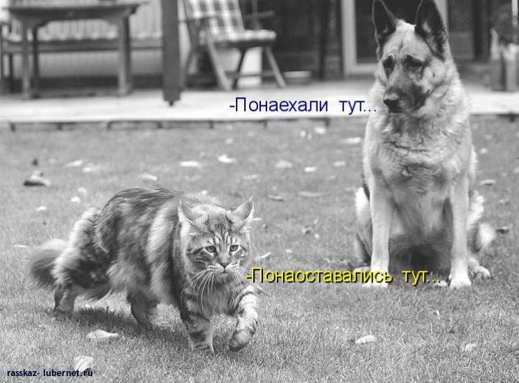 Фотография: 035.jpg, пользователя: rasskaz