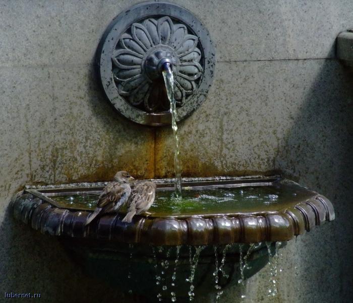 Фотография: Водные процедуры., пользователя: Gertsog