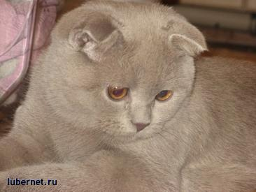 Фотография:  ТИМОША, пользователя: nadi_070