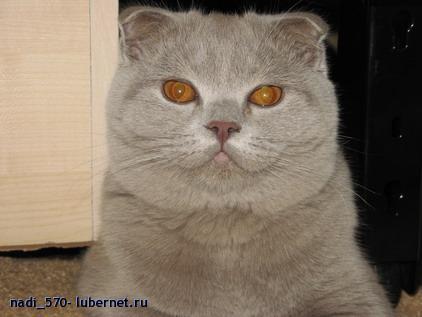 Фотография: всё тот же котик....., пользователя: nadi_070