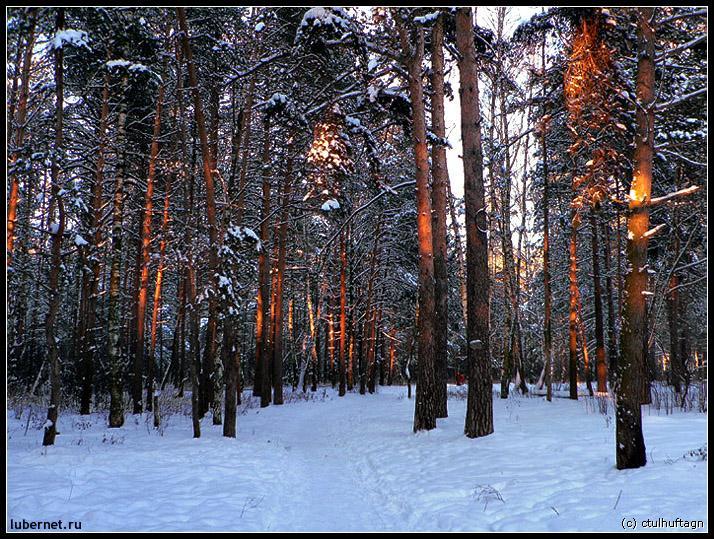 Фотография: Красные деревья, пользователя: ctulhu