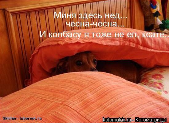 Фотография: kotomatrix_23.jpg, пользователя: Skicher