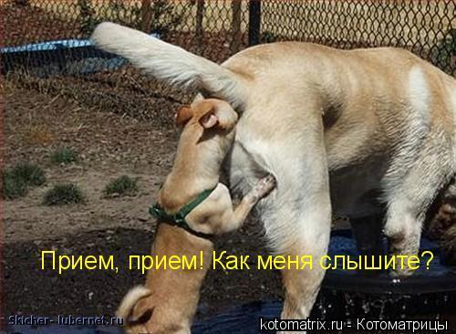 Фотография: kotomatrix_29.jpg, пользователя: Skicher