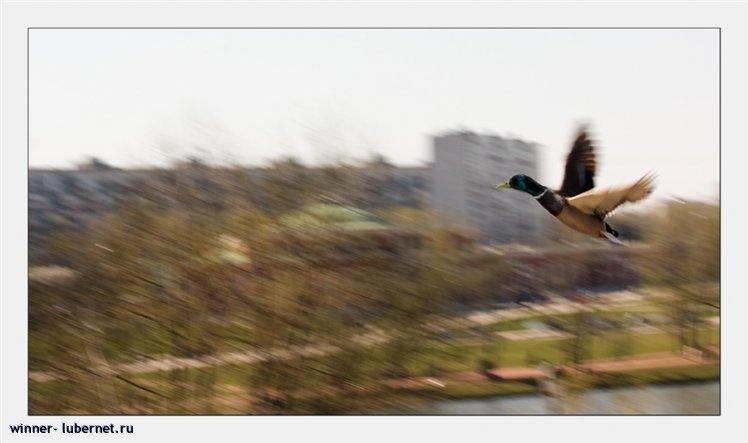 Фотография: Полёт, пользователя:  &#9733 winner &#9733