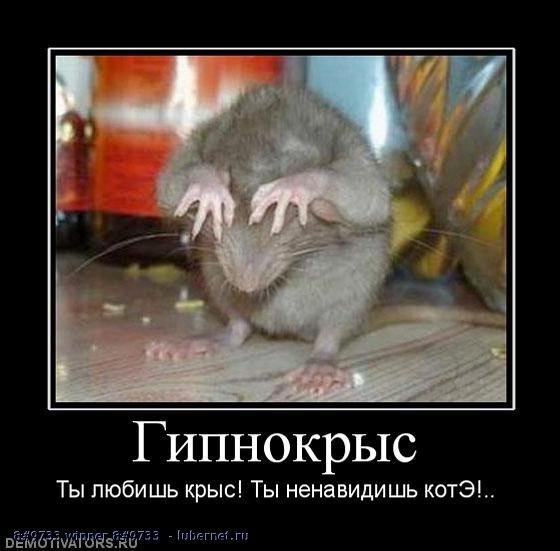 Фотография: Не грузите сюда котов !, пользователя:  &#9733 winner &#9733