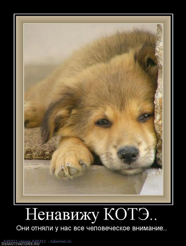 Фотография: Ненавижу котэ , пользователя:  &#9733 winner &#9733