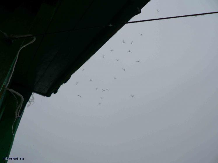 Фотография: комары, пользователя: мотя