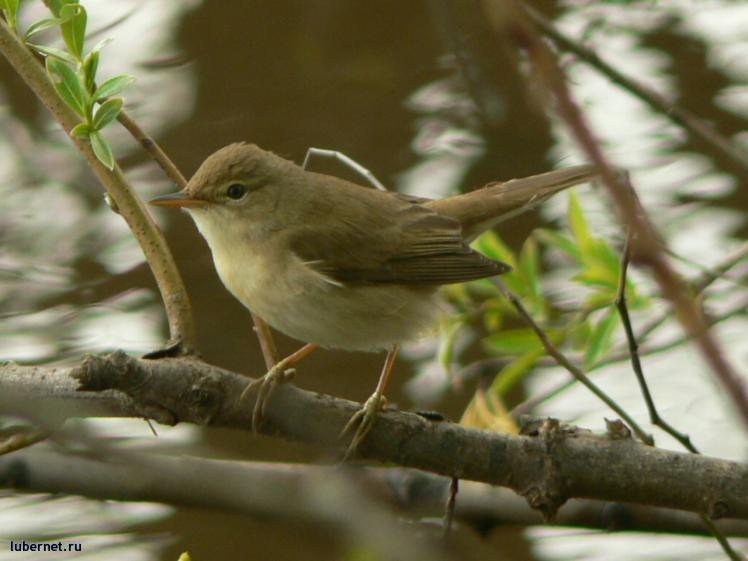 Фотография: птица, пользователя: мотя