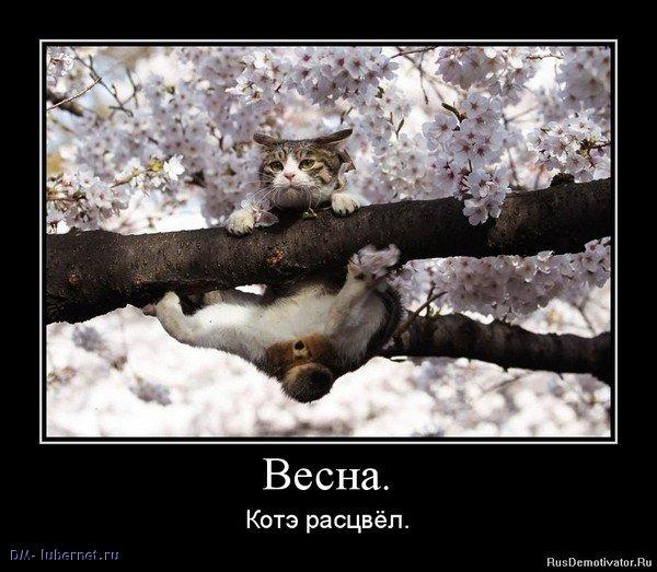 Фотография: 1330280688-vesna..jpg, пользователя: DM