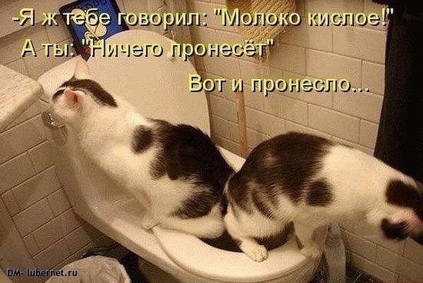 Фотография: Кошки.jpeg, пользователя: DM