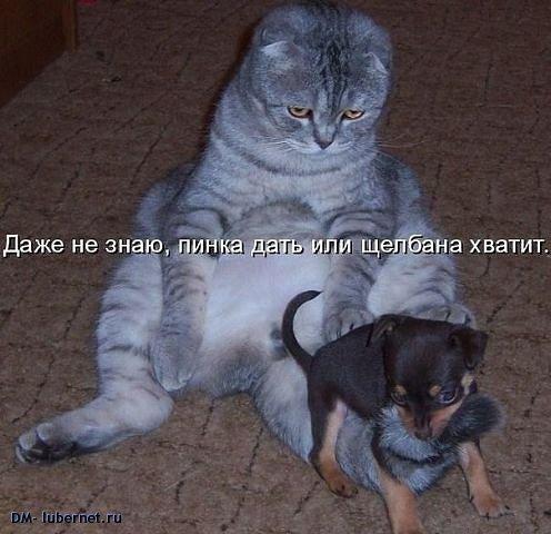 Фотография: Кот и щенок.jpeg, пользователя: DM