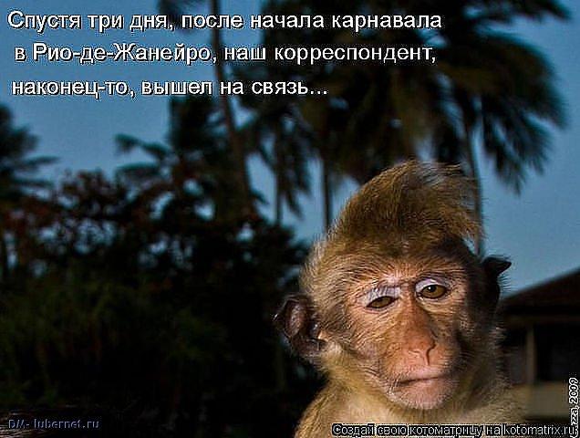 Фотография: Рио и обезьянка.jpeg, пользователя: DM