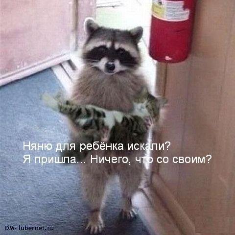 Фотография: Енот и котёнок.JPG, пользователя: DM