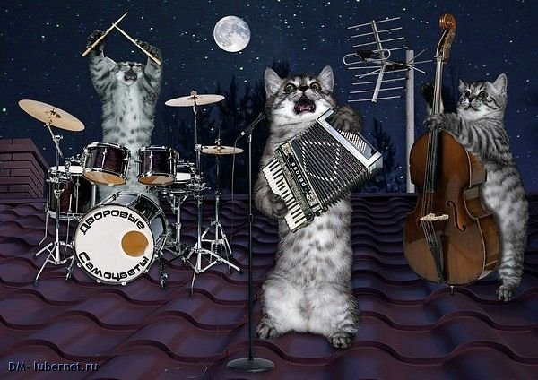 Фотография: Весенние коты.jpg, пользователя: DM