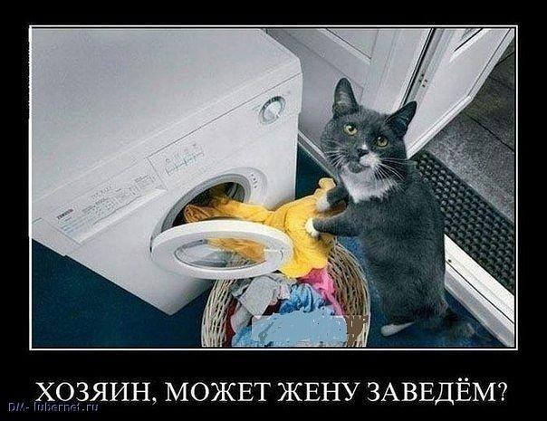 Фотография: Бедняга кот.jpeg, пользователя: DM