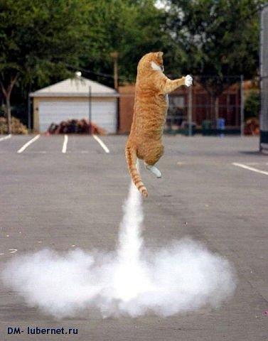 Фотография: Кот ракета.jpeg, пользователя: DM