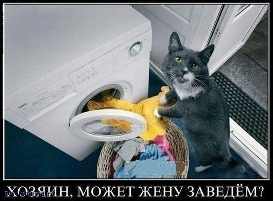 Фотография: Кошка и стиральная машина.jpg, пользователя: DM