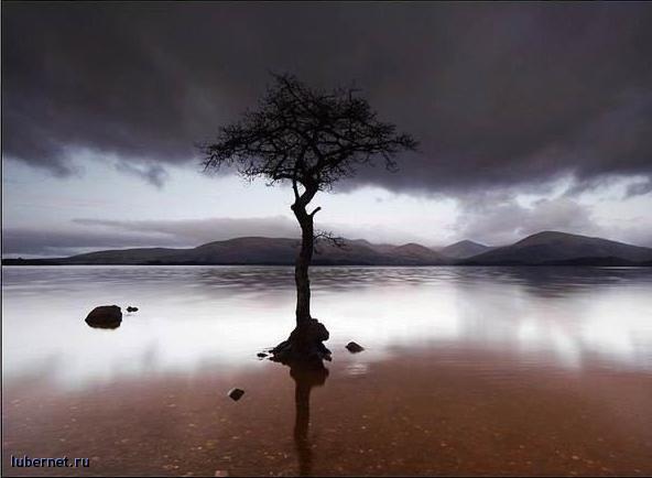 Фотография: Дерево, пользователя: DM