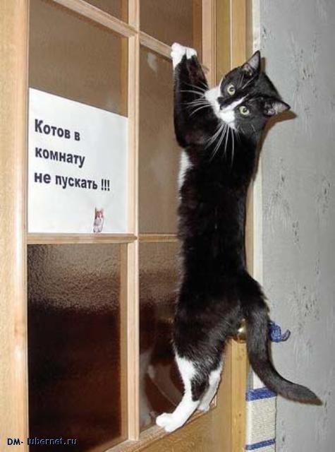 Фотография: котов в комнату не пускать.jpg, пользователя: DM