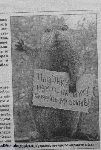 Фотография: Бобруйск для бобров, пользователя: DM