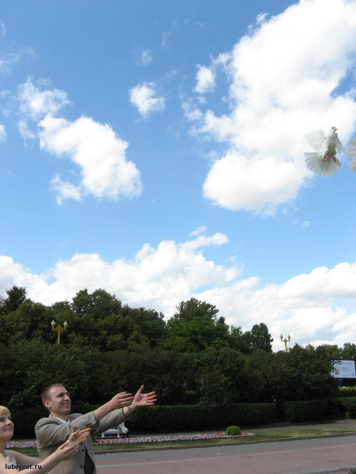 Фотография: Летите, голуби, летите!, пользователя: Sima