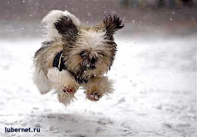 Фотография: Быстрее..., пользователя: SVLANK
