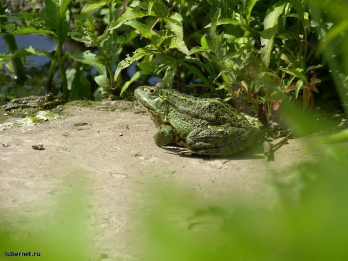 Фотография: Моя лягушонка., пользователя: orbj