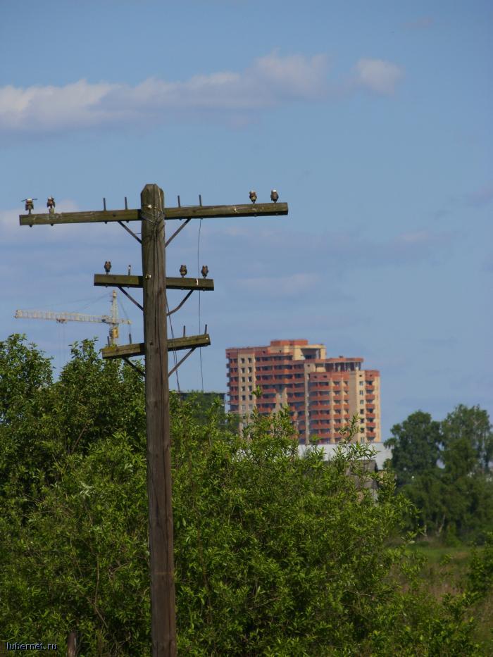 Фотография: Памятник телефонно-телеграфным линиям прошлого..., пользователя: orbj