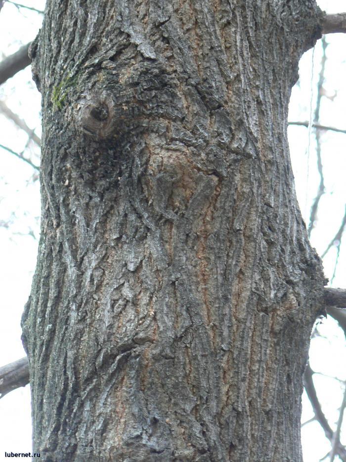 Фотография: Загадочное дерево., пользователя: orbj